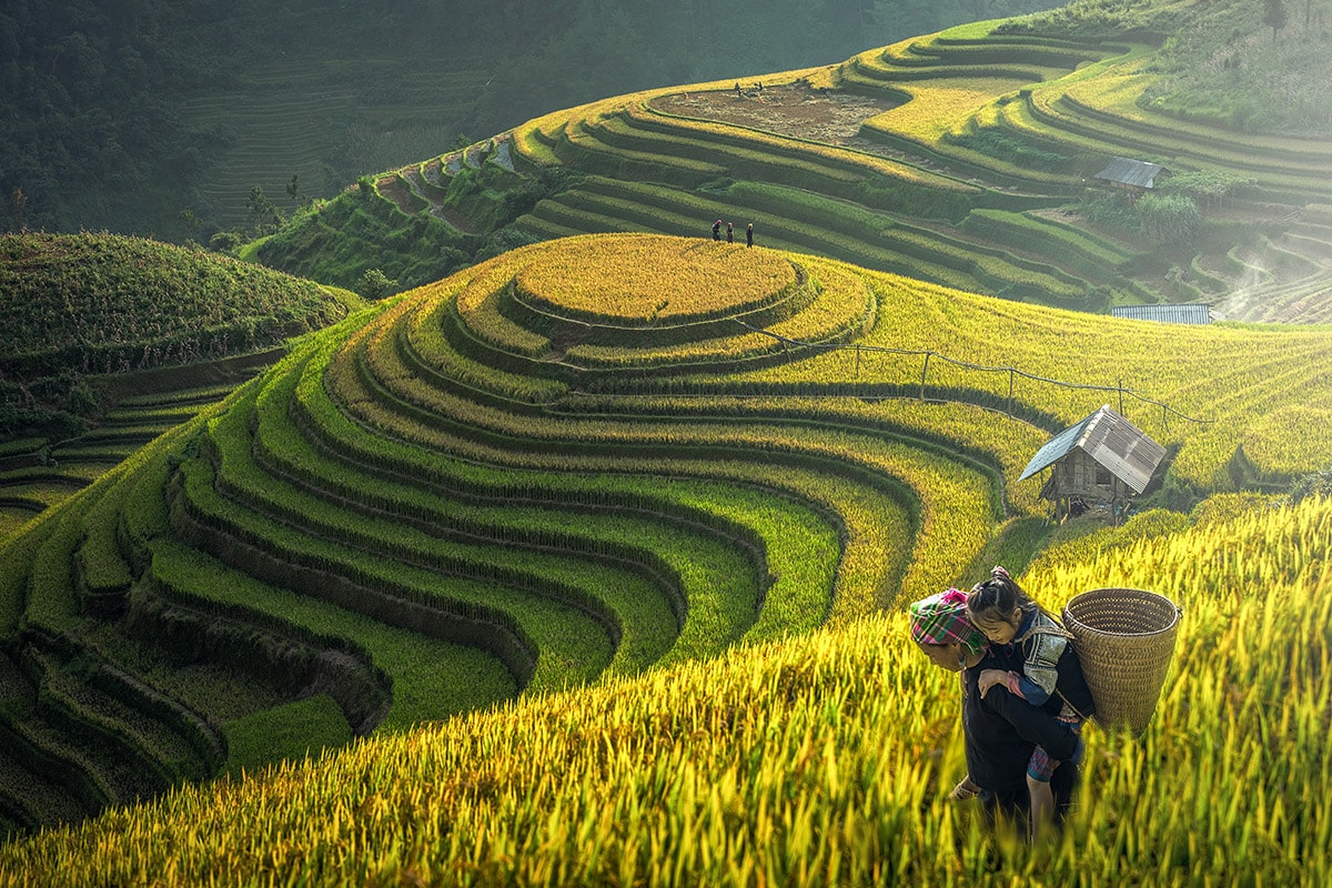 Sapa trekking tour 1 day